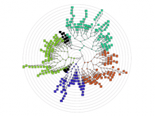 An interactive visualisation tool for the hierarchical clustering of large data sets