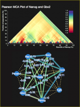 MCAweb: an interactive graphical tool for Multiresolution Correlation Analysis in single-cell data
