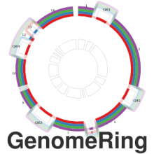 GenomeRing: alignment visualization based on SuperGenome coordinates