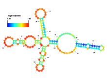 SAVoR: Annotation and Visualization of RNA structures